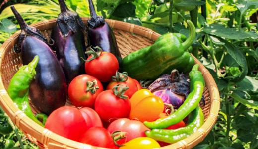 陰陽五行からみる夏のオススメ野菜