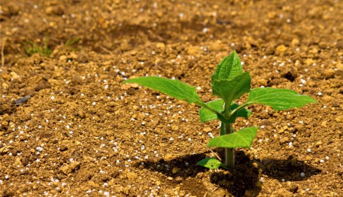 無農薬野菜と土壌