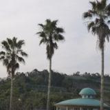 パーム油と地球温暖化