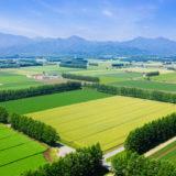 化学肥料とエネルギー
