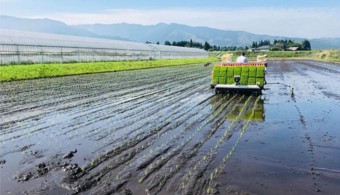 こんな効果が!稲作と光合成細菌
